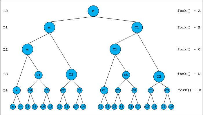 fork() and Binary Tree - GeeksforGeeks